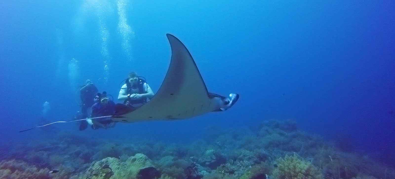 liveaboard diving trips Philippines